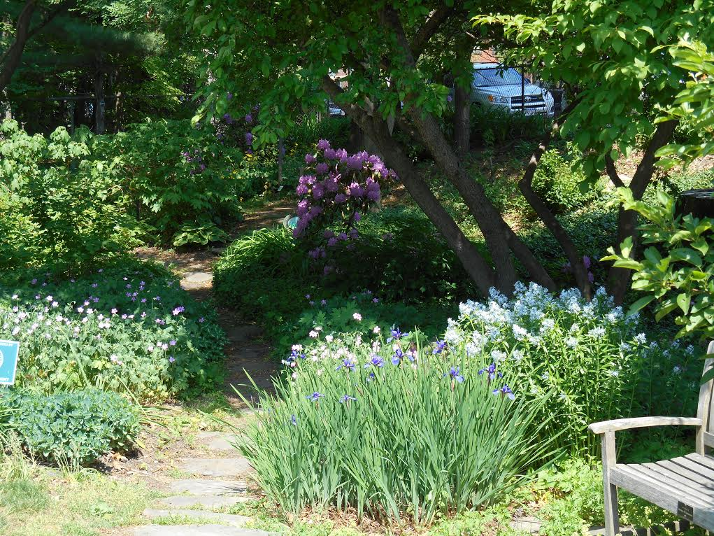 Image result for belmont, MA woodland garden